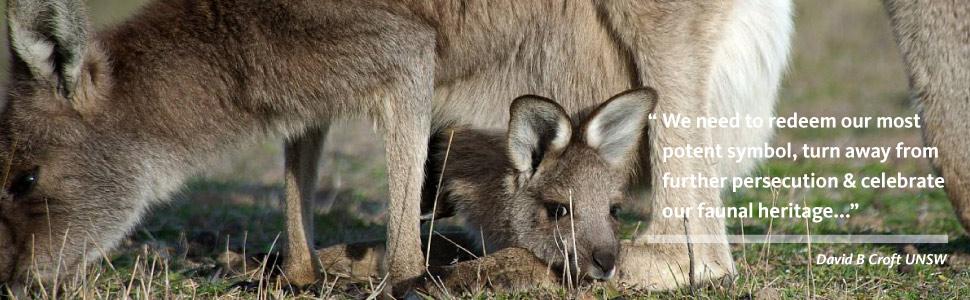 Kangaroo_Croft