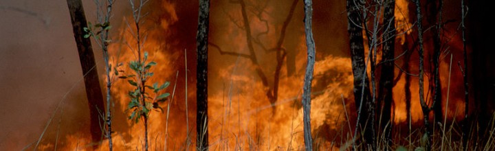 'Pause and Review of All Prescribed Burning'