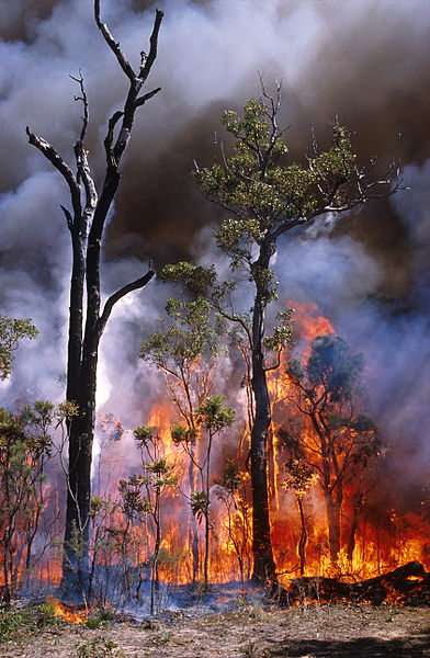 CSIRO_ScienceImage_511_Experimental_Burning_of_Bushland