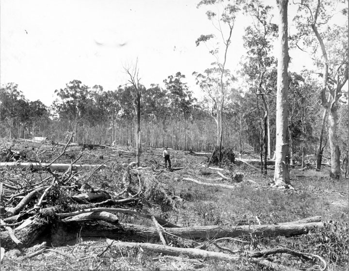 Queensland_State_Archives_2630_Land_clearing_Beerburrum_December_1916