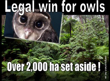 owl-win-small