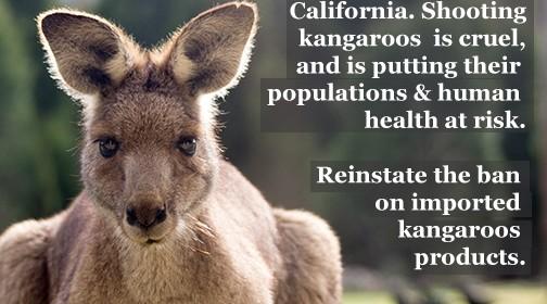 kangarooLeatherCalifornia