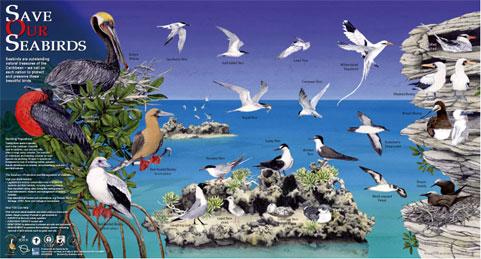 Seabird_poster