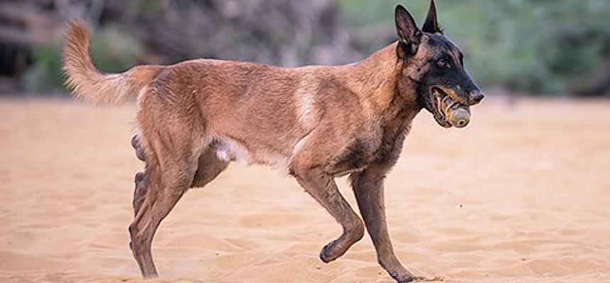 Yellow-Boy-detection-dog_photo-IFAW-Mar2020