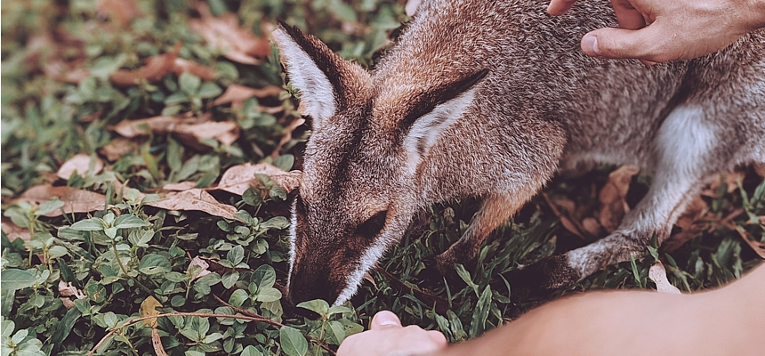 tourist-feeding-wallaby-ValeriiaMiller-Pexels
