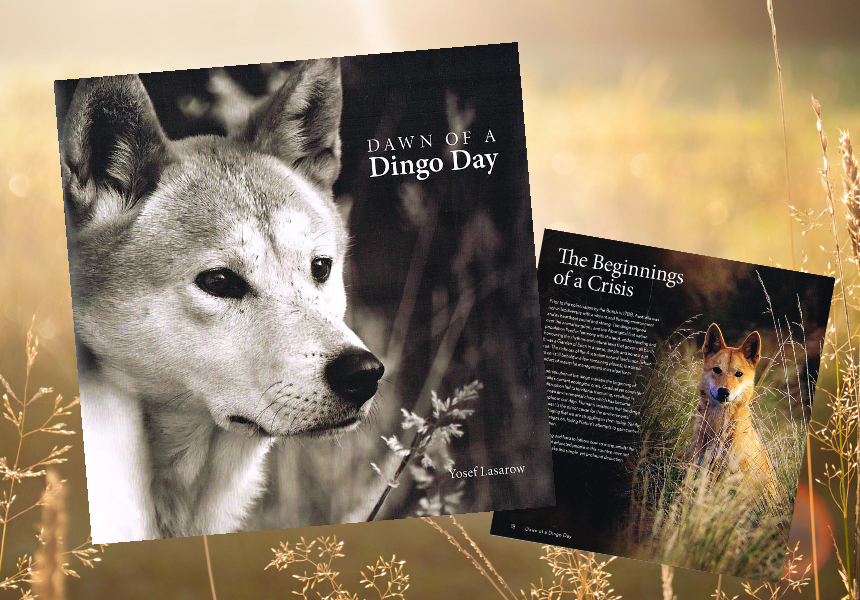 Dawn of a Dingo Day-book-promo-aug2020