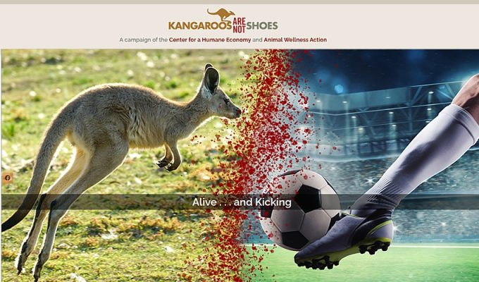 kangaroo-shoes-aug2020