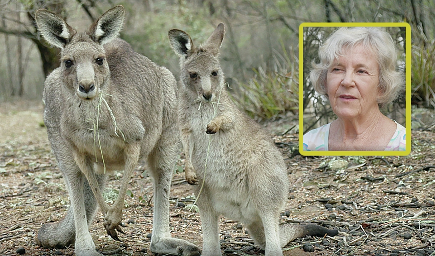 world-kangaroo-day