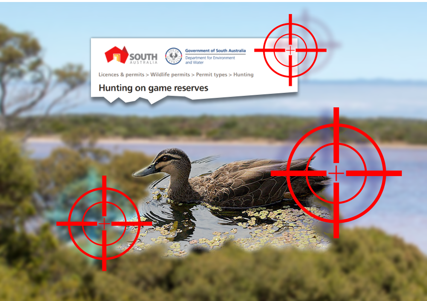 South-Aust-duck-shooting-season-2021