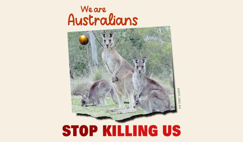 We are Australians-meme-AWPC-feature-SueVanHomrigh